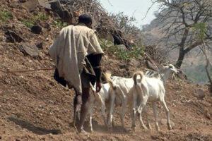 Barrett-IBLI-Herders